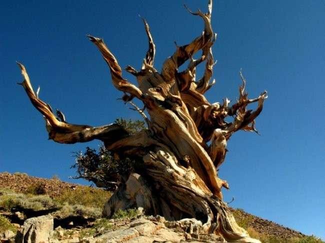 10-ка долгожителей планеты Земля