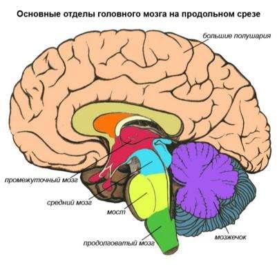 Мозг у человека большой, но пользоваться им не выгодно