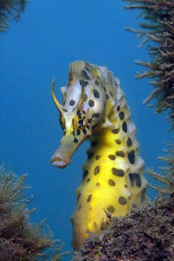 Что же за крутой зверёк - наш герой морской конёк?