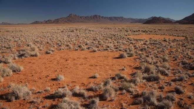 """""""Волшебным кругам"""" в Намибии найдено новое объяснение"""