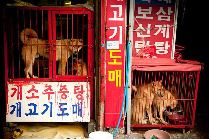 В Южной Корее закроют крупнейший рынок собачьего мяса