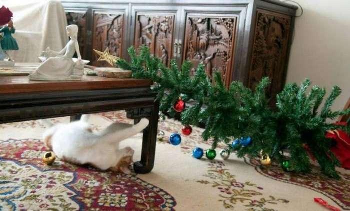 Миссия выполнена! Коты против новогодних ёлок