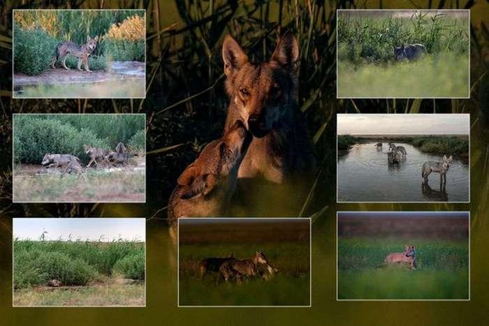 Победители фотоконкурса «Дикая природа России-2016»