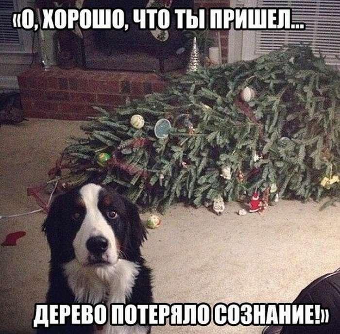 http://chert-poberi.ru/wp-content/uploads/proga/111/images/sasha-02january1722331533-15.jpg