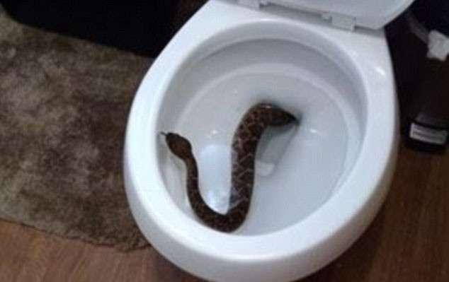 Они обнаружили у себя в туалете гремучую змею, и это было только начало