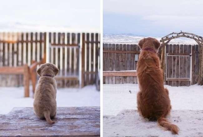 14 очаровательных щенков, которые выросли слишком быстро