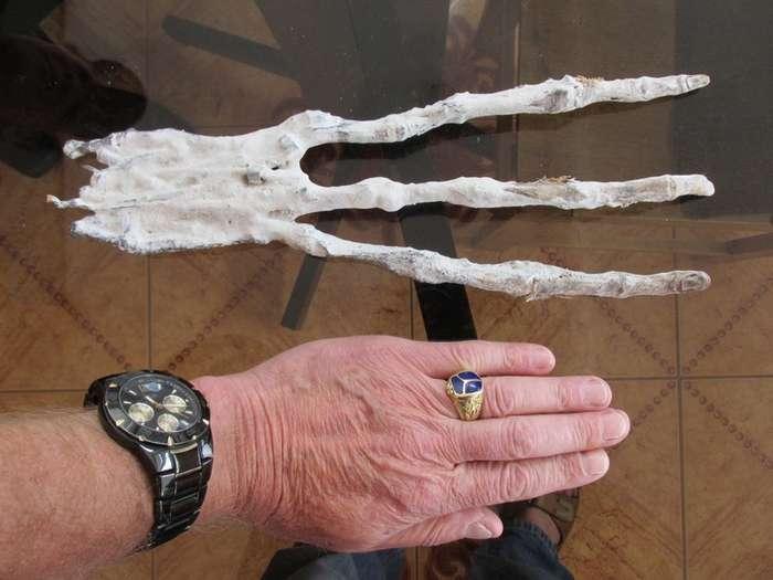 В Перу найдена странная рука с тремя длинными пальцами