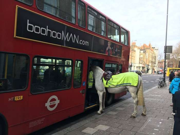 В Лондоне лошадь попыталась сесть в автобус
