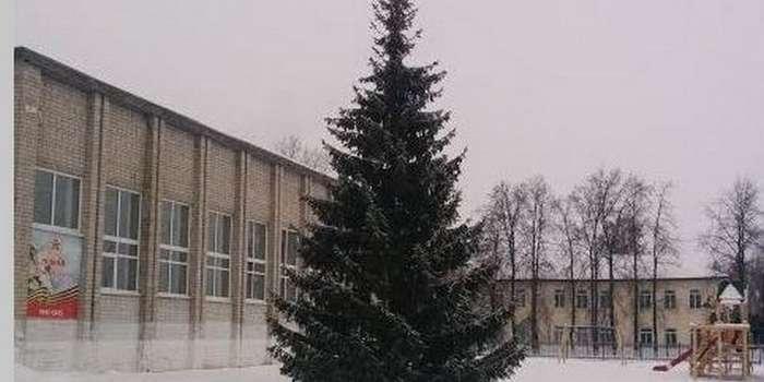 Тюменские чиновники «добыли» новогоднюю елку в палисаднике у старушки