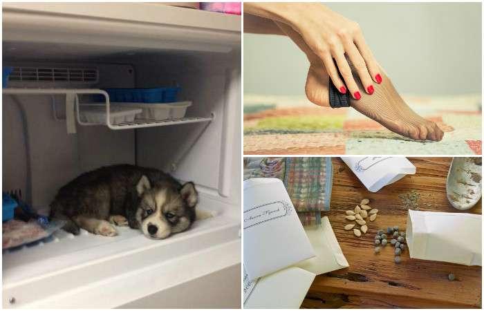 Отмороженные: 8 очень полезных способов использовать морозильную камеру не по назначению