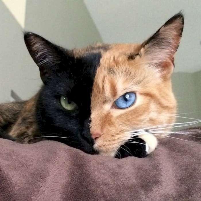 12 необычно окрашенных котов