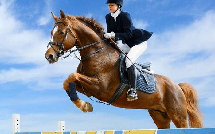 Занимательные факты о лошадях