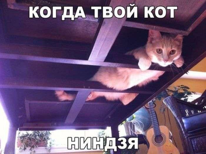 Подборка прикольных фото №1558 (142 фото)
