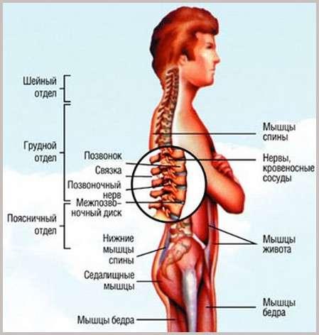 6 упражнений от боли в спине (3 фото)