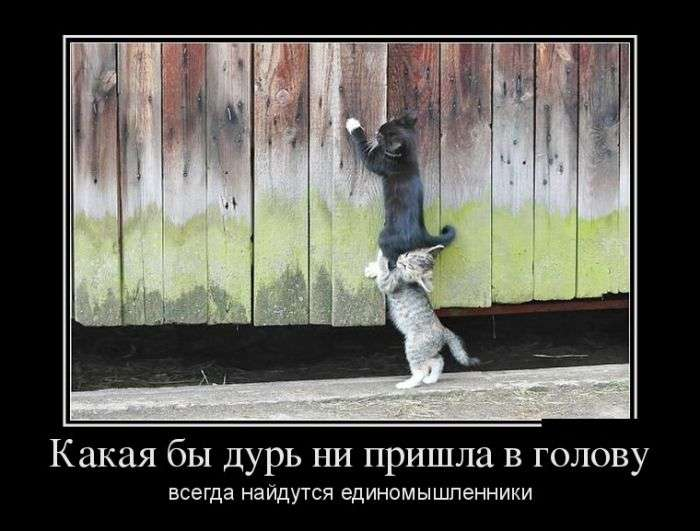 Демотиваторы №1557 (30 фото)