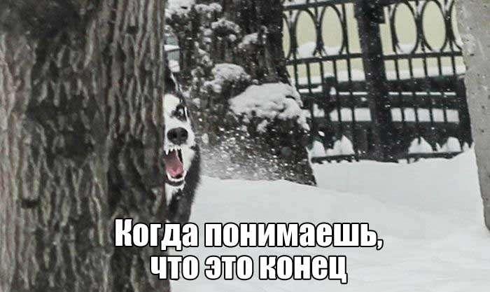 Подборка прикольных фото №1540 (104 фото)