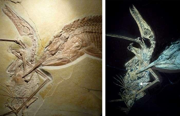 15 самых причудливых ископаемых, которые переворачивают представления о древнем мире