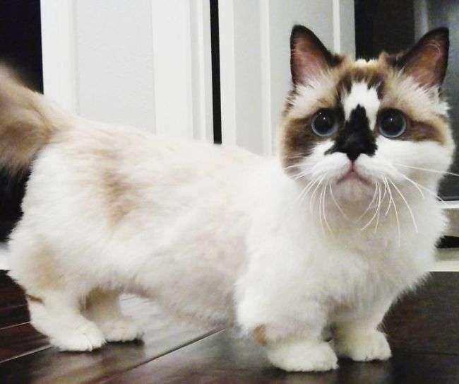 Кот по кличке Альберт – еще одна звезда соцсетей