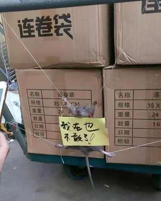 Китайцы устроили пытки крысе, воровавшей рис (2 фото)