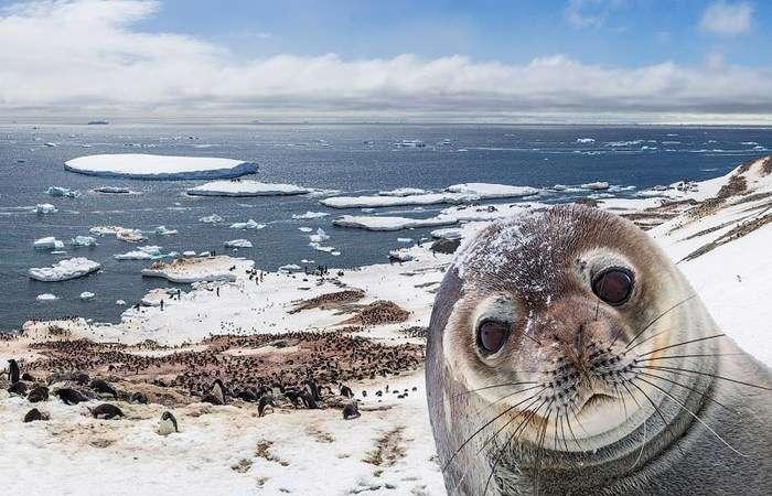 15 шокирующих фактов о пагубном влиянии человека на окружающую среду