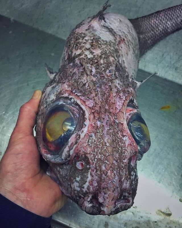 Порция новых монстров, выловленных в океане
