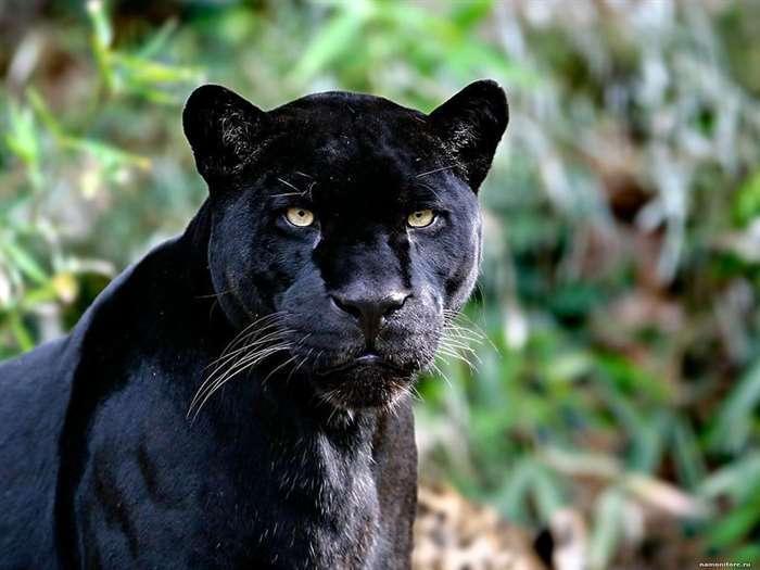 10 наиболее красивых животных в мире