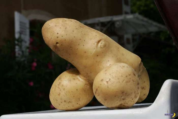 Картофан ни в чем не виноват!