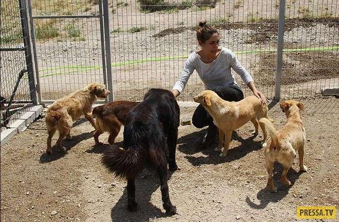 Криштиану Рональду жертвует деньги не только нуждающимся людям, но и животным (8 фото)
