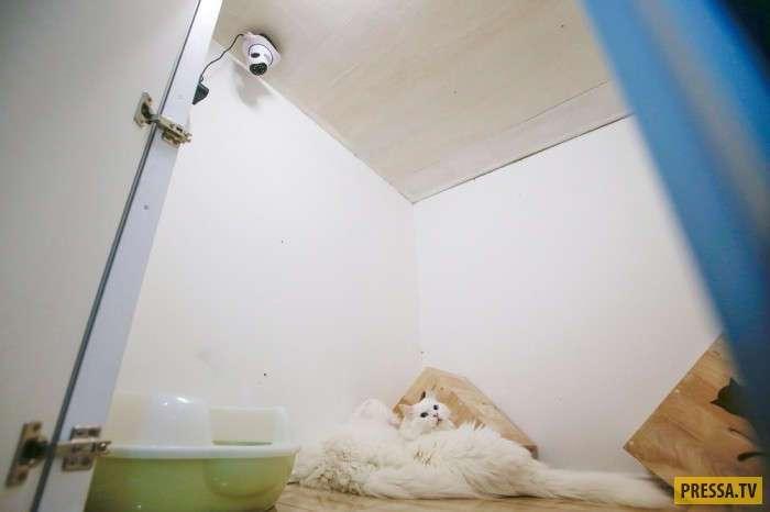 В Малайзии открылся отель 5 звёзд для котов (7 фото)
