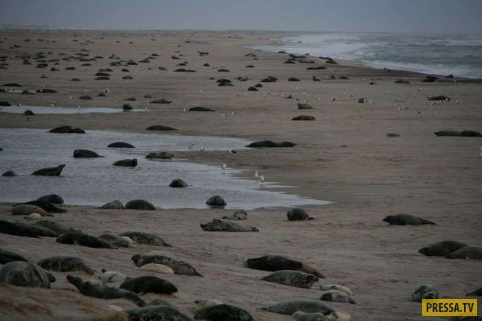 Остров Сейбл -Кладбище Атлантики- — называют его моряки (36 фото+2 видео)