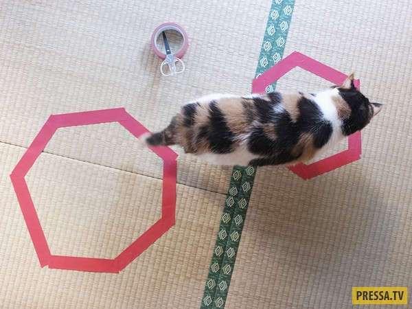 Коты и кошки: интересный эксперимент (13 фото)