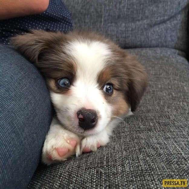 Фотографии маленьких щенков для всех, кто любит собак (21 фото)