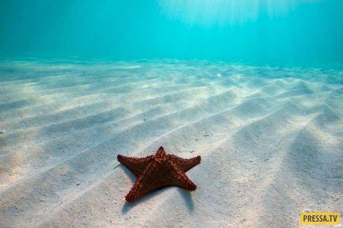 Невероятно красивые пляжи на коралловых островах (26 фото)