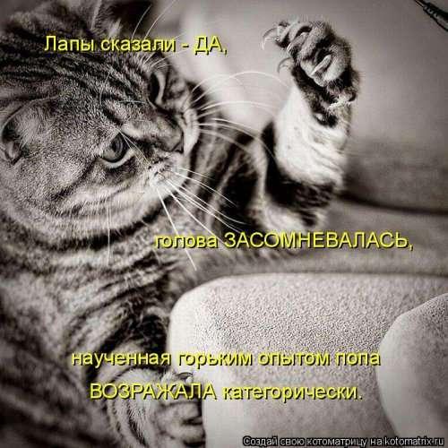 Новая котоматрица на Бугаге (44 фото)