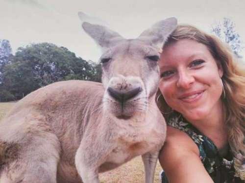 Тем временем в Австралии (25 фото)