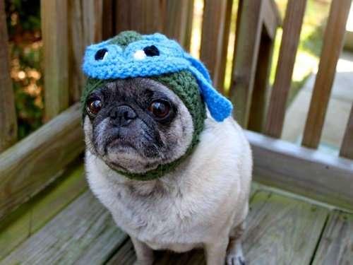 Вязаные шапочки для мопсов (15 фото)