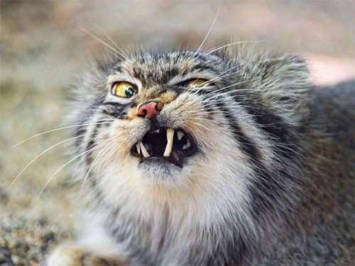 Чихающие кошки, которые вызовут у вас улыбку (16 фото)
