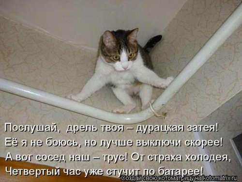 Новая котоматрица недели (39 фото)