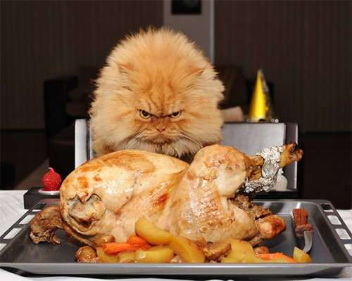 Кошки, которые охотятся за вашей едой (15 фото)