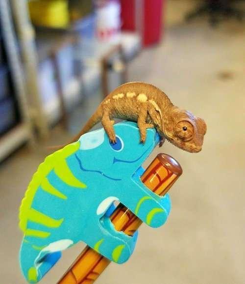Самый мимишный -челлендж- в Интернете (16 фото)