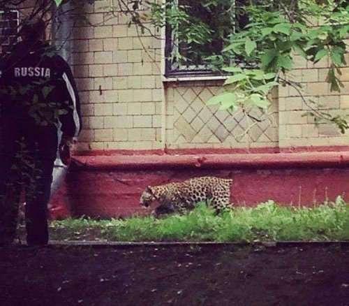 Тем временем где-то в России (20 фото)