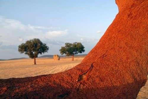 Пробковая кора - урожай для самых терпеливых фермеров