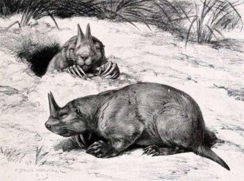 Топ-25: Древние существа, которые, возможно, были не такими уж страшными