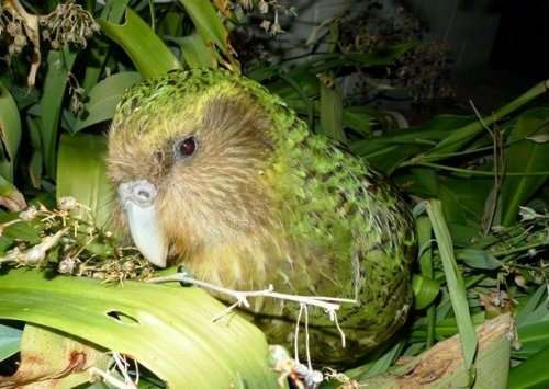 Одни из самых редких птиц в мире (15 фото)