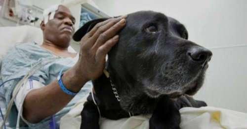 Топ-10: невероятные истории о собаках-спасателях, которые растопят любое сердце