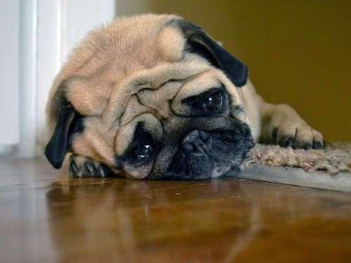 Собаки, у которых выдался тяжёлый день (16 фото)