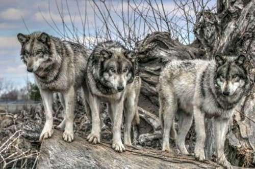 Топ-10: Душераздирающие истории про людей, оказавшихся один на один против диких животных