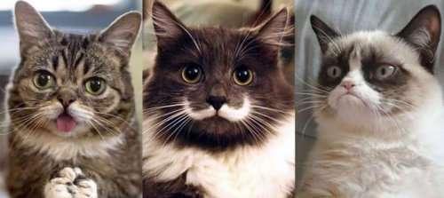 Топ-10: самые знаменитые кошки в мире