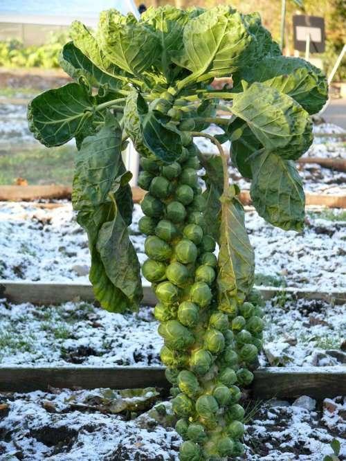 Неожиданные фотографии нашей любимой еды до сбора урожая (28 фото)