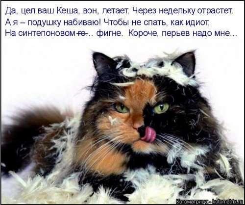 Новая котоматрица (39 фото)